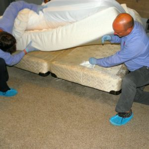 bed bug inspection myrtle beach