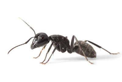 ps-ant2
