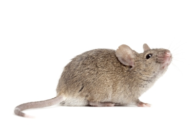 ps-mouse