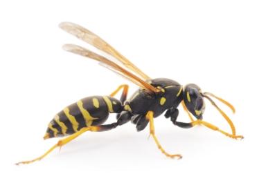 ps-wasp